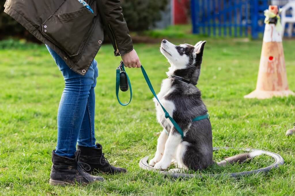 Feature image for What Are Good Natural Dog Treats for Training?